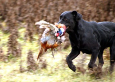 Upland-Hunting-in-Hungary
